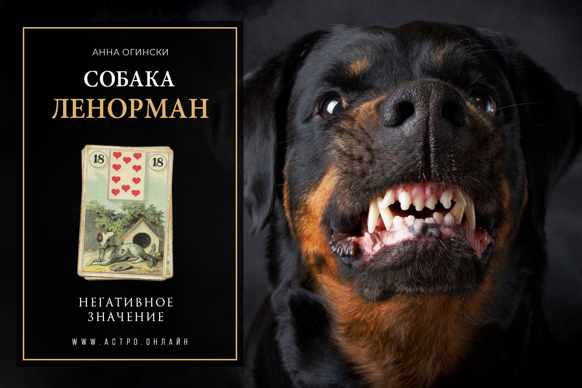 Негативное значение по карте Собака в Ленорман